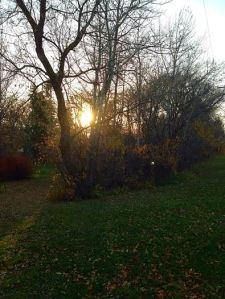 bare trees2